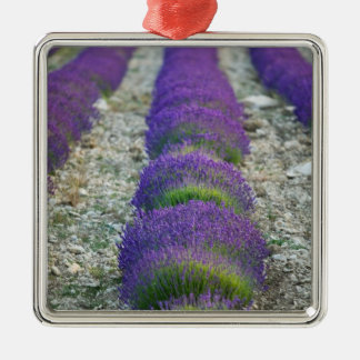 Lavender field, Provence, France Christmas Ornament