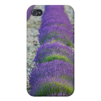 Lavender field, Provence, France Cover For iPhone 4