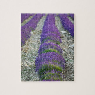 Lavender field, Provence, France Jigsaw Puzzle