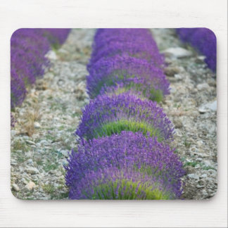 Lavender field, Provence, France Mouse Mat