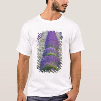 Lavender field, Provence, France T-Shirt