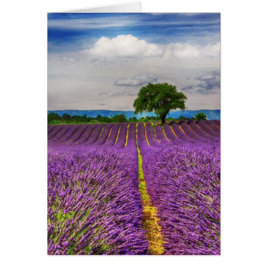 Lavender Field scenic, France Card