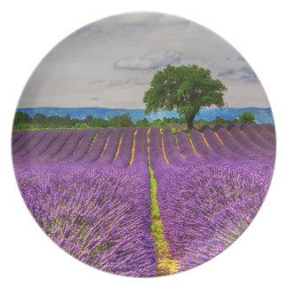 Lavender Field scenic, France Plate