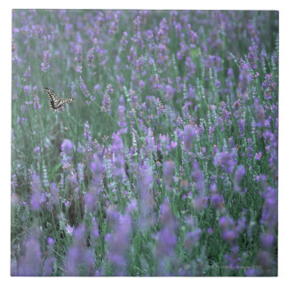 Lavender Field Tile