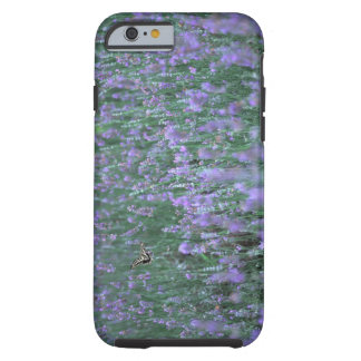 Lavender Field Tough iPhone 6 Case