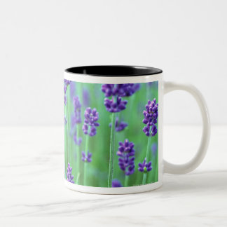 Lavender Field Two-Tone Coffee Mug
