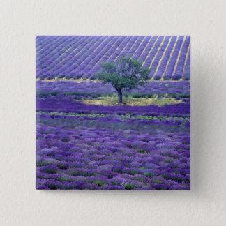 Lavender fields, Vence, Provence, France 15 Cm Square Badge