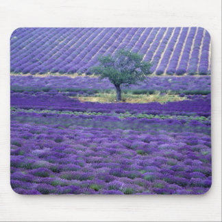 Lavender fields, Vence, Provence, France Mouse Mat