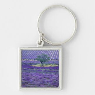 Lavender fields, Vence, Provence, France Silver-Colored Square Key Ring