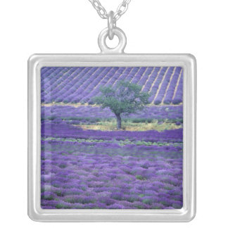 Lavender fields, Vence, Provence, France Silver Plated Necklace