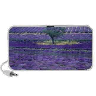 Lavender fields Vence Provence France Mp3 Speaker