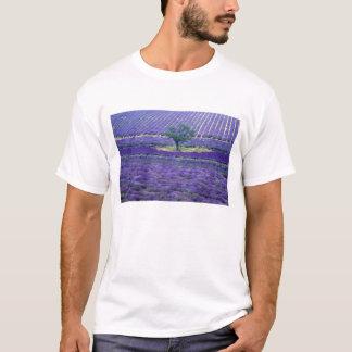 Lavender fields, Vence, Provence, France T-Shirt