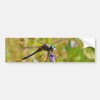 Lavender flower dragonfly bumper sticker