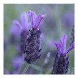 Lavender Flower Photo Invitations