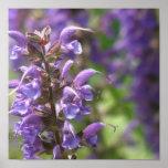 Lavender Flower Poster Print