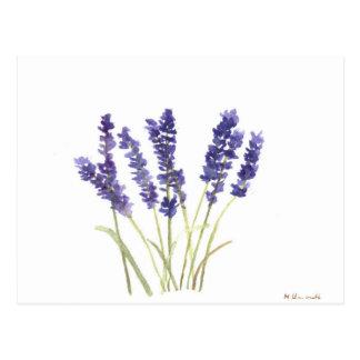 Lavender flowers french lavender postcard