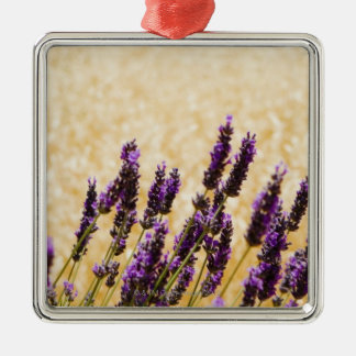Lavender flowers in a field, Siena Province, Christmas Ornament