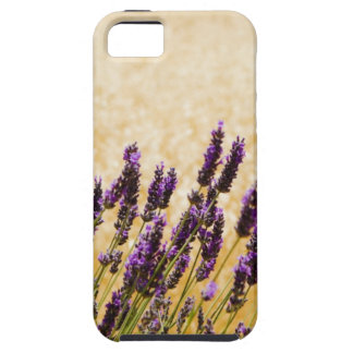 Lavender flowers in a field, Siena Province, iPhone 5 Case
