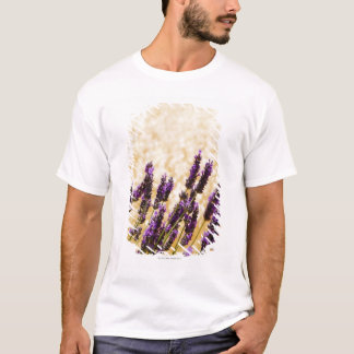 Lavender flowers in a field, Siena Province, T-Shirt