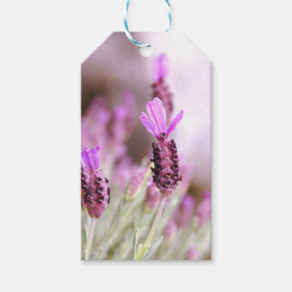 Lavender Gift Tag