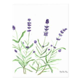Lavender herb botanical print postcard