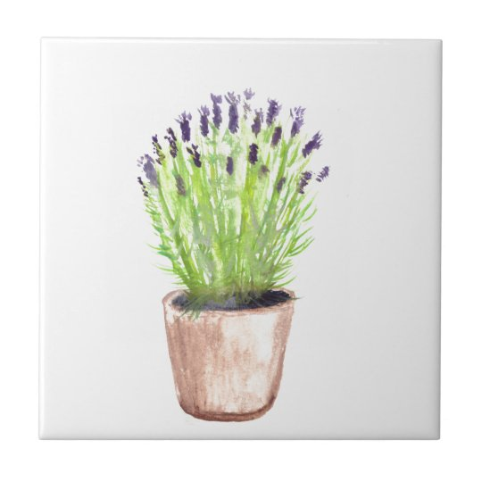 Lavender herb pot plant small square tile