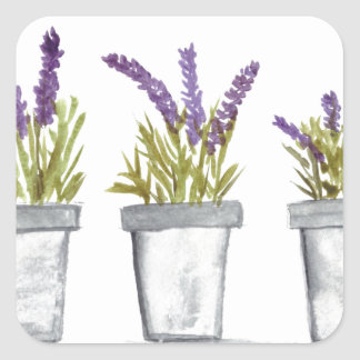 Lavender herb pots square sticker