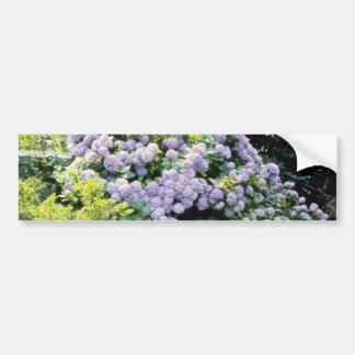 Lavender Hydrangea Macrophylla (blue) flowers Bumper Sticker