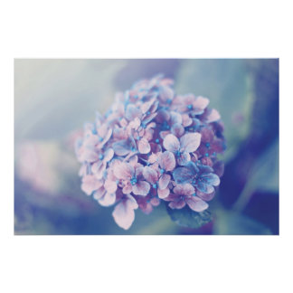 Lavender Hydrangea Poster