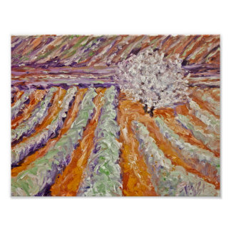 Lavender in Early Bloom Poster