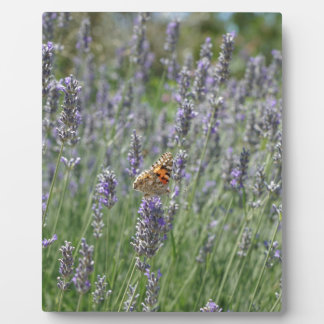 lavender in France Display Plaques