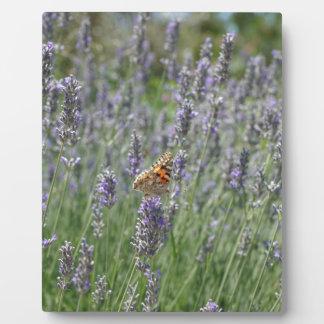 lavender in France Plaque