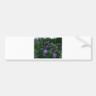 Lavender Lantana Bumper Sticker