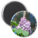 Lavender Lilac  Magnet Refrigerator Magnets