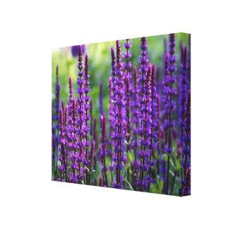 Lavender Lilac Photo Canvas