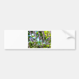 Lavender morning bumper sticker