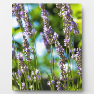 Lavender morning plaque