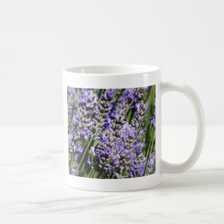 Lavender Mugs