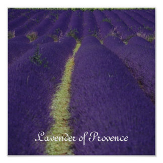 Lavender of Provence Poster