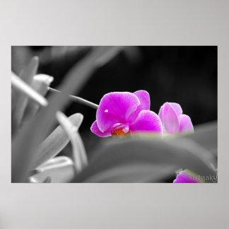 lavender orchid Print