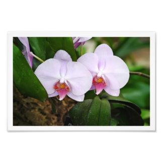 Lavender Orquids Photo Print