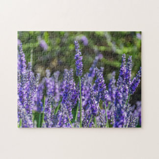 Lavender photo puzzle
