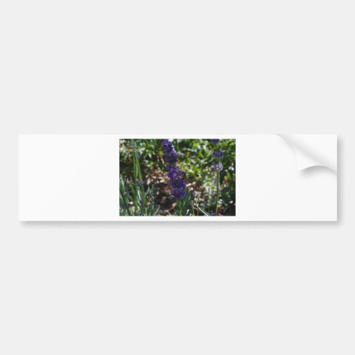Lavender photo with honeybee bumper stickers