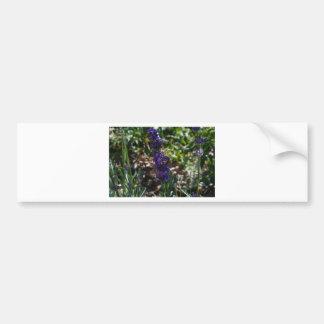Lavender photo with honeybee bumper stickers