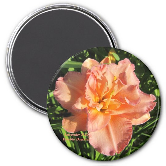 Lavender Pink Double Daylilies Magnet