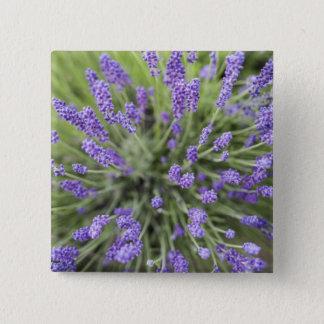 Lavender plants 15 cm square badge