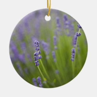 Lavender plants 2 christmas ornament
