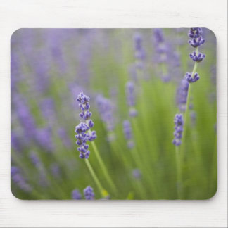 Lavender plants 2 mouse mat