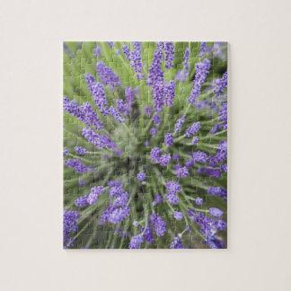 Lavender plants jigsaw puzzle