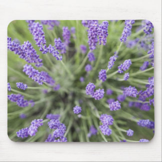 Lavender plants mouse mat